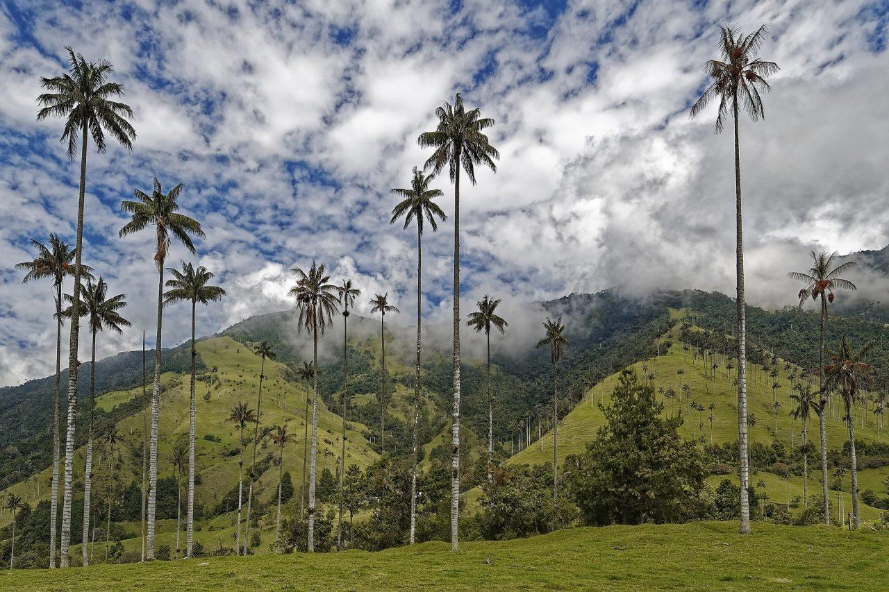 colombia palmeto