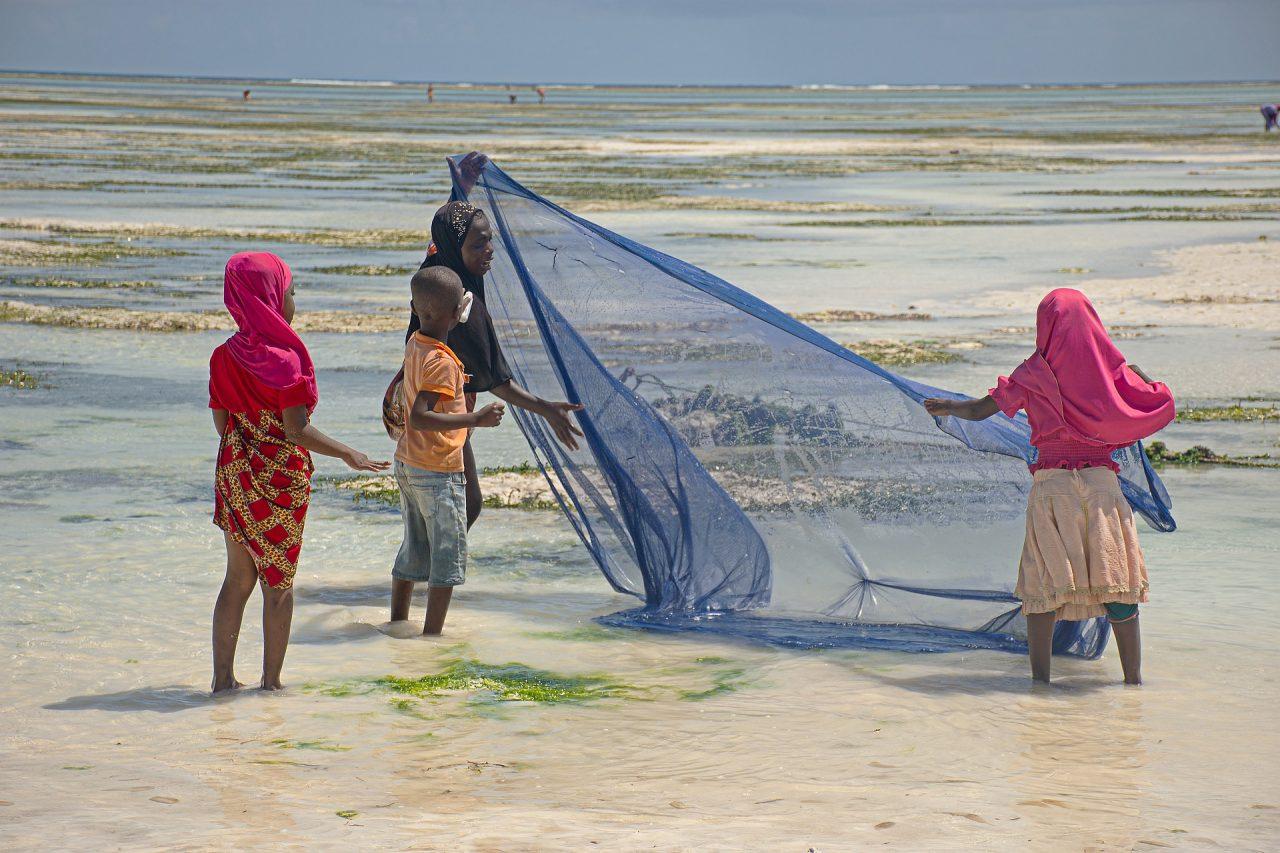 Zanzibar raccolta delle alghe