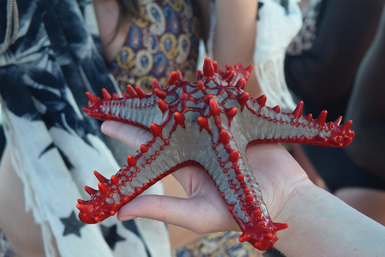 stella marina a Zanzibar