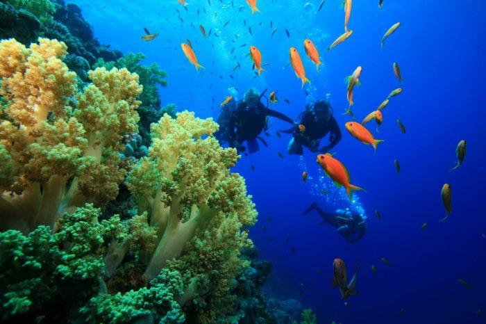 Scubando: Viaggi Sub Ischia: tra snorkeling e immersioni – 01 Settembre