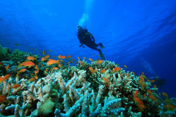 Scubando: Viaggio sub Giappone – Immersioni nel blu di Okinawa