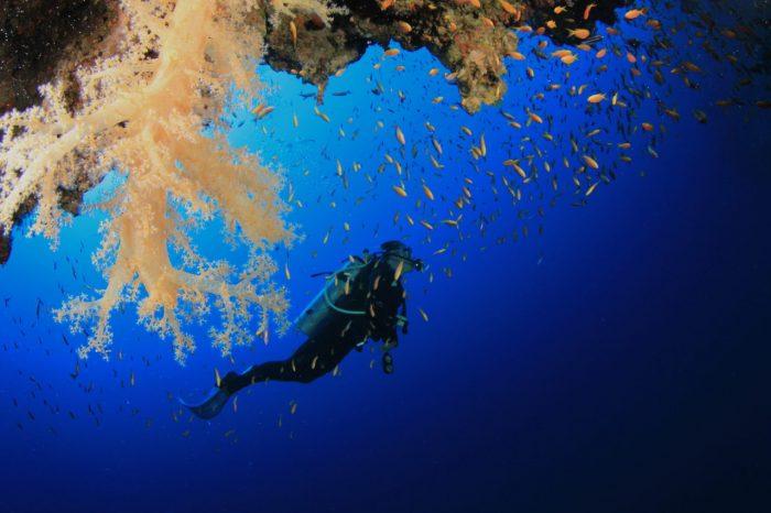 Scubando: Viaggio a Malta_Immersioni tra i relitti