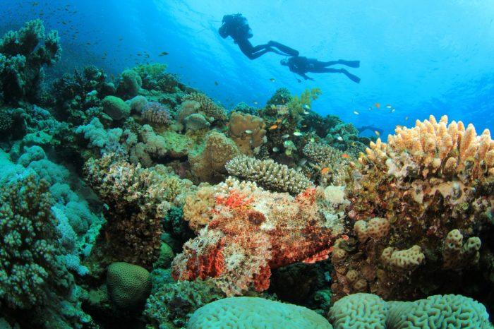 Scubando: Viaggi Sub Ustica: Immersioni nell'Isola di Circe