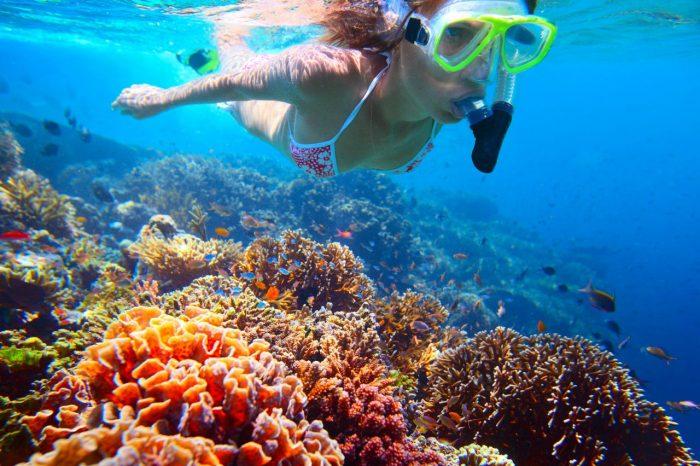 Scubando: Viaggio sub: Immersioni all'Isola del Giglio
