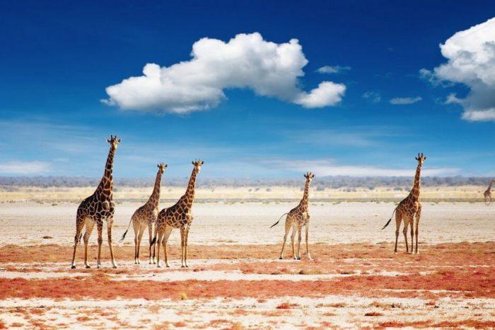 Tour Classico Namibia 2021 – Partenze Garantite