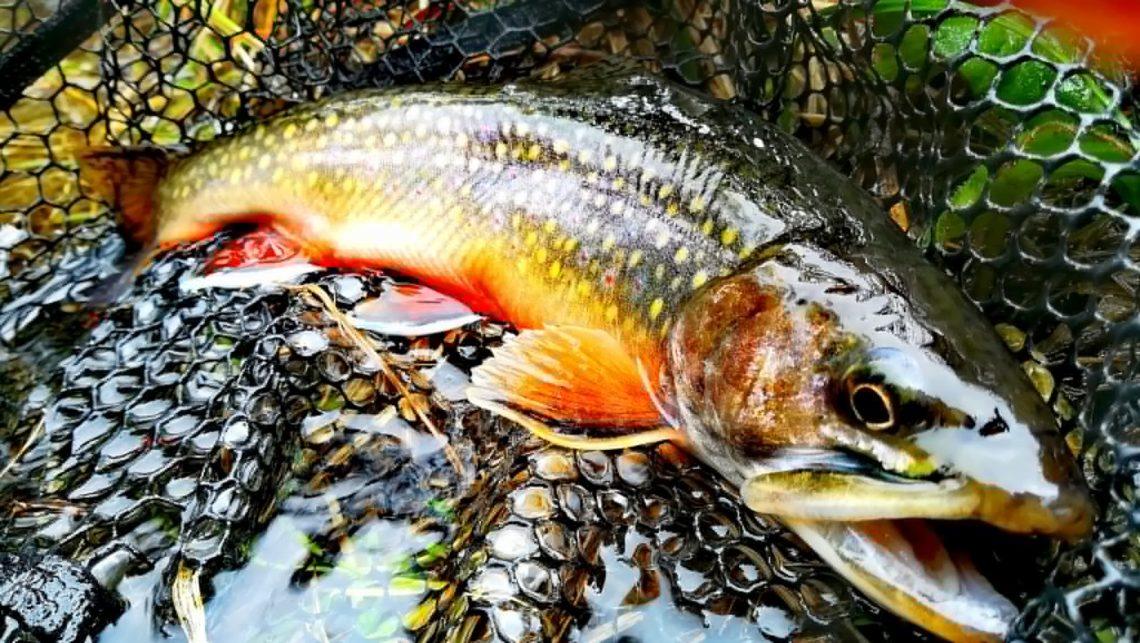pesce valle d'aosta